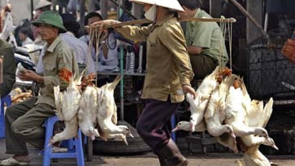 Markt in Hanoi: Gute Bedingungen für die Ausbreitung der Vogelgrippe