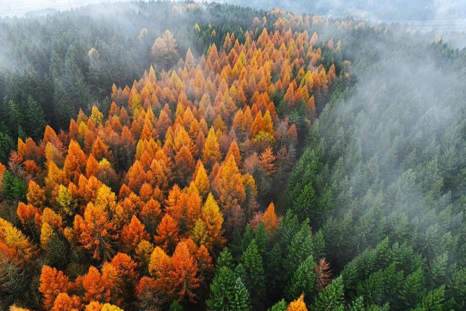 Nebelschwaden ziehen im November 2017 über den herbstlichen Thüringer Wald bei Sonneberg: Die Deutschen haben nicht irgendein Verhältnis zu ihrem Wald, es ist schon ein ganz bestimmtes.