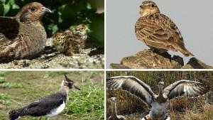 Die Zahl der Vögel geht stark zurück