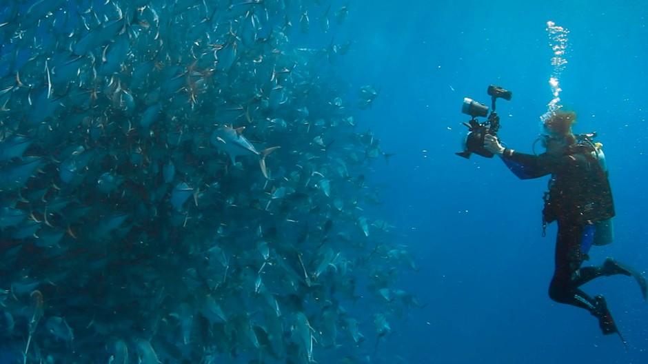 Die fleißige Filmfigur fotografiert frische Fische, die frischen Fische fürchten den frei schwimmenden Filmfotografen nicht.