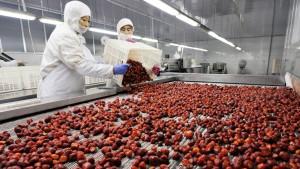 Verseuchte Erdbeeren lösten Brechdurchfall aus