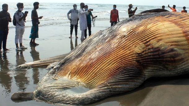 Zwei tote Wale an Küste Bangladeschs angespült