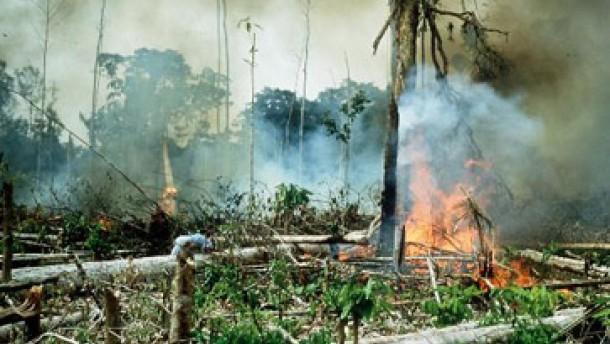 Artenreichtum in Südostasien bedroht