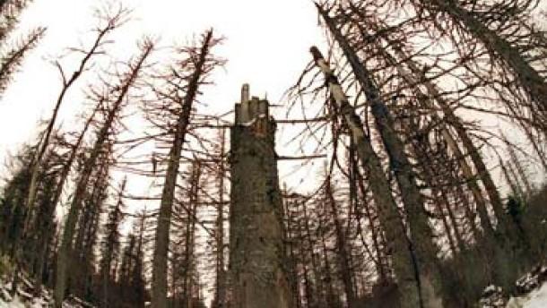 Waldsterben 1