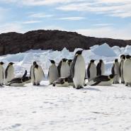Es gibt mehr Kaiserpinguine in der Antarktis als bislang angenommen. (Archivbild)