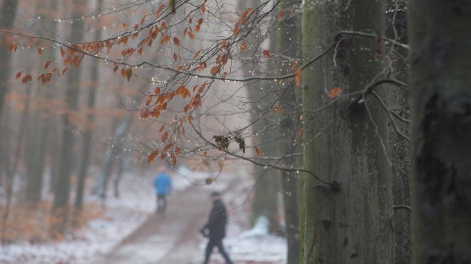 Spaziergänger gehen im Dezember 2017 in Dresden auf einem Waldweg entlang:  Der Wald senkt laut simpler Vorher-Nachher-Messung den Spiegel des Stresshormons Cortisol im Blut, erhöht die Anzahl der sogenannten Killerzellen, stärkt also das Immunsystem und senkt Blutdruck und Puls.