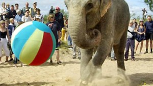 "Elefant ""Tonga"" rüttelte Auto samt Insassen durch"