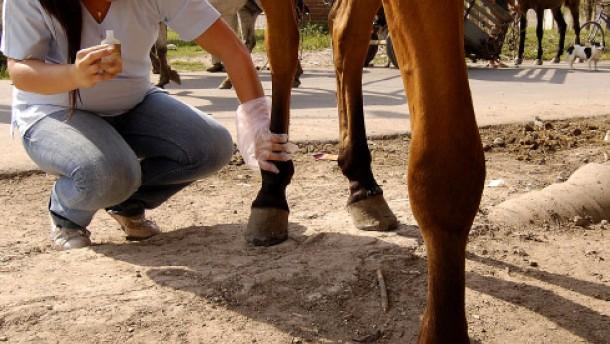 Pferdesprechstunde bei Doctora Dolores