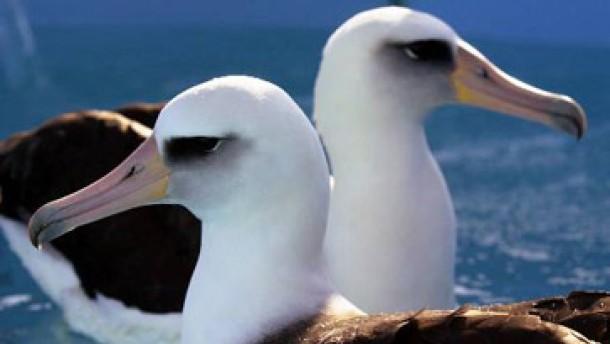 Jede achte Vogelart ist vom Aussterben bedroht