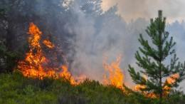 """""""Waldbrände sind nicht das typische Einsatzszenario"""""""