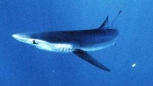 Lidl nimmt Hai-Steaks aus dem Sortiment