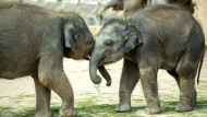 Ermittlungen wegen Verdachts auf Elefantenquälerei eingestellt
