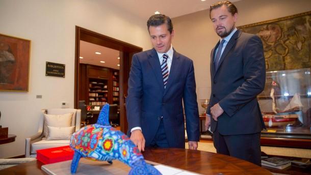 DiCaprio will Kalifornische Schweinswale retten