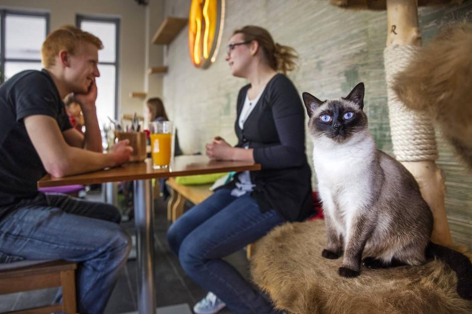 Katzencafes Deutschland