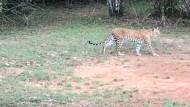 In der Wildnis Sri Lankas