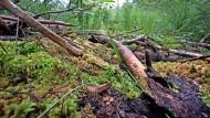 Das Moor im Allgäu an der Grenze von Baden-Württemberg und Bayern wurde über Jahrzehnte immer weiter ausgetrocknet.