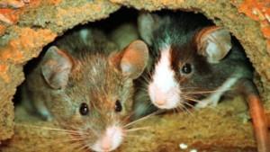Protein KIF17 lässt Mäuse schneller lernen