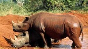 Serengeti stirbt nicht