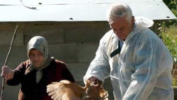 Vogelgrippe-Virus breitet sich weiter aus