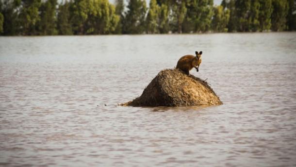 Australien kämpft weiter gegen die Regenfluten