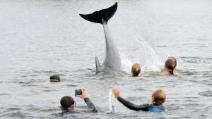 Delfin schwimmt mit Kindern