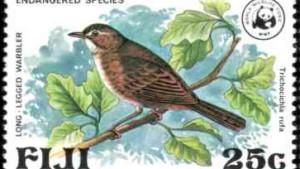 Ausgestorben geglaubte Vogelart auf Fidschi entdeckt