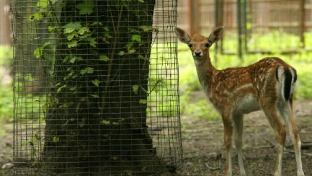 Zoo-Tiere geschlachtet und verkauft