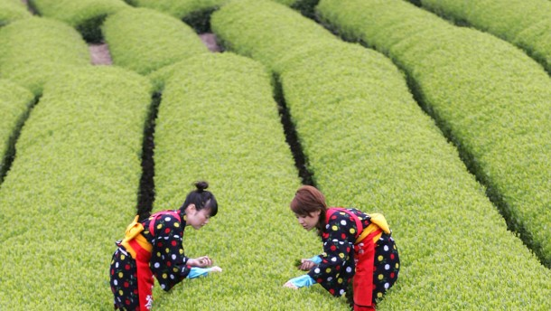 Auch grüner Tee radioaktiv verstrahlt