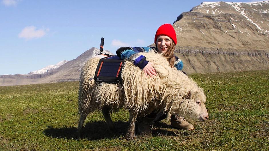 Ganz vorsichtig habe man das Kamerageschirr am ersten Schaf ausprobiert, sagt Durita Dahl Andreassen. Doch das Schaf kümmerte sich darum gar nicht.