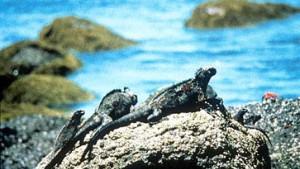 Galapagos-Inseln erneut von Ölpest betroffen