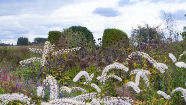 Gartendesigner piet oudolf ist der meister der stauden for Piet oudolf pflanzen
