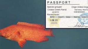 Bunte Tropenfische schwimmen von einem Computer zum anderen