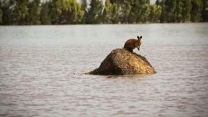 Schwere Überschwemmungen in Australien