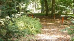 Baumbestattungen auch in Frankfurt ein Trend
