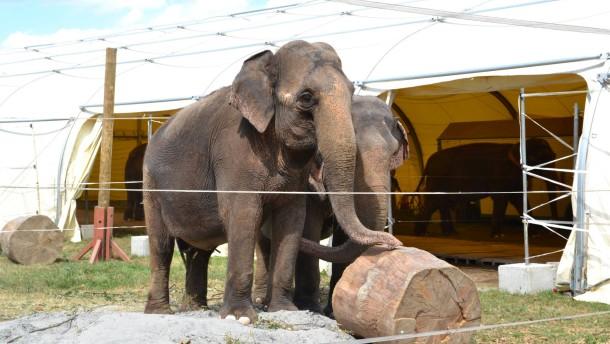 Wildtiere sollen aus dem Zirkus verbannt werden