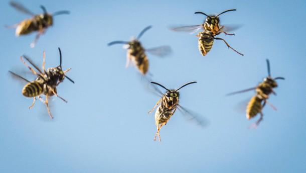 Mann stirbt nach Wespenstichen