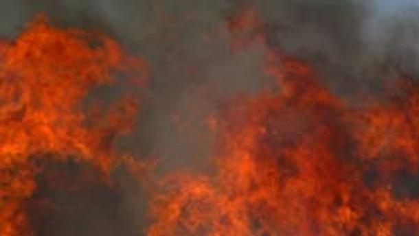 Organisierte Banden sollen Waldbrände gelegt haben