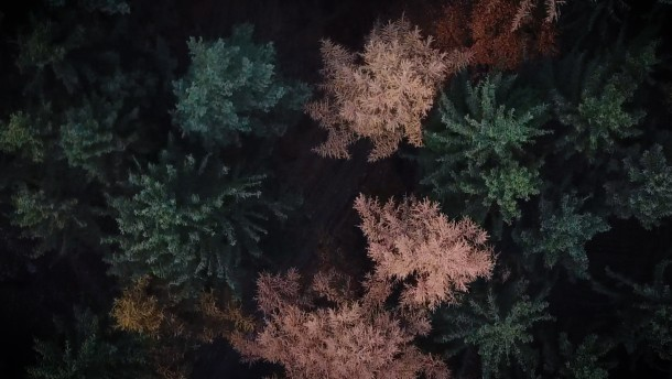 Wie grün ist der Weihnachtsbaum?