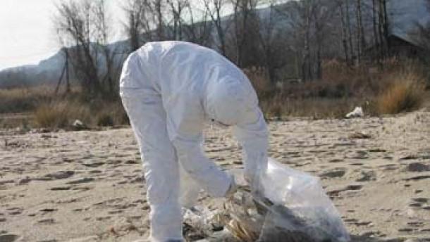Die Vogelgrippe erreicht die EU