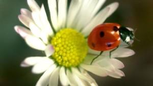 Kann dieser Käfer  Leben retten?
