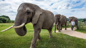 Tierschützer mobilisieren gegen Elefanten bei Festspielen
