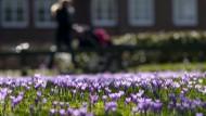 Der Frühling ist im Anmarsch