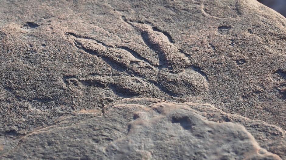 Wissenschaftler gehen davon aus, dass das Tier zu diesem Abdruck etwa 75 Zentimeter groß und 2,5 Meter lang war.