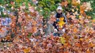 Bitte umblättern: Laubgebläse erleben einen Absatzboom, doch ihr Nutzen ist gering