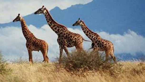 Milzbrand rafft Wildtiere in Südafrika dahin