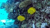 Studien belegen, dass einige Inhaltsstoffe in chemischen Sonnencremes zur Korallenbleiche beitragen und die Fortpflanzung von Fischen gefährden können.