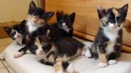 Achtung, alles schaut auf mein Kommando: Katzen reagieren auf Bewegung.