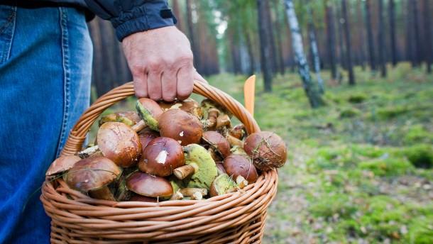 Pilzsammler entdecken Uran-Behälter im Wald