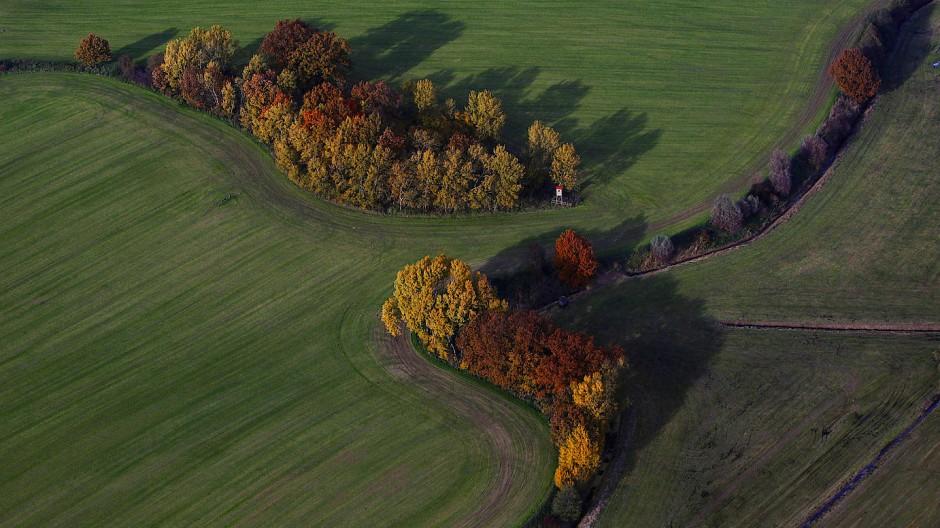Bei Hohenzieritz in Mecklenburg-Vorpommern liegt der Schutzbunker im Wald. (Archivbild)