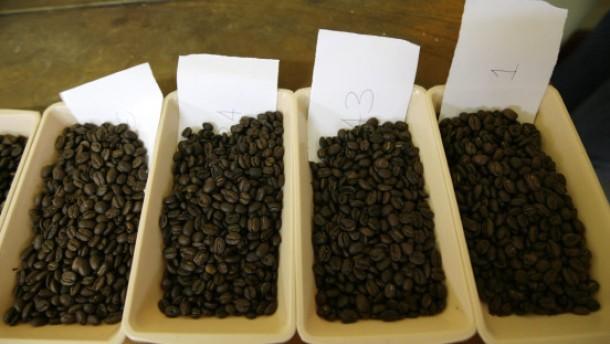 Kaffee schmeckt oft modrig-muffig